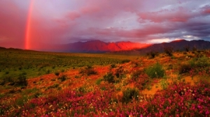 desert flowers rainbow